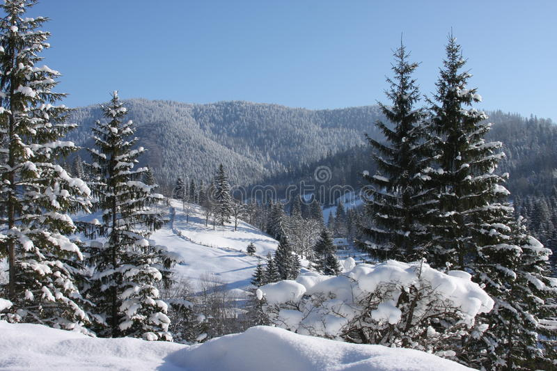 Mountains And Trees Covered In Snow Stock Photo