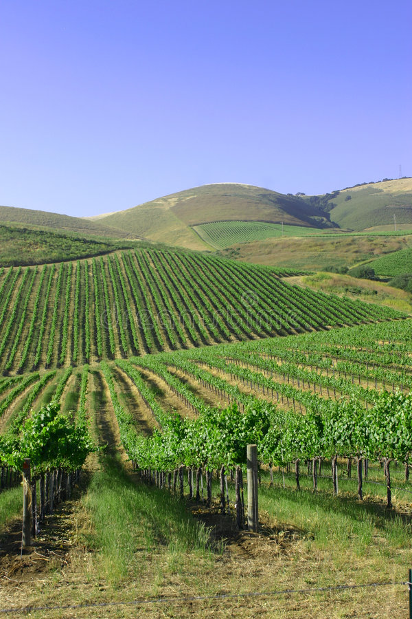 Mountains and vineyards royalty free stock image