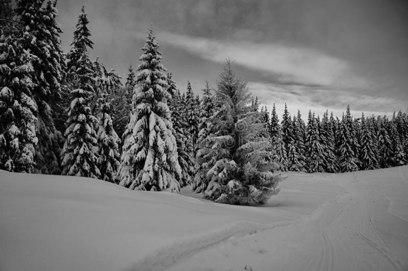Mountains winter pine tree forest landscape 2 - Black and white royalty free stock photography