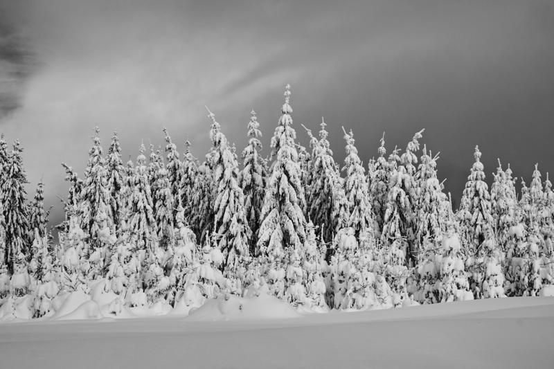 Mountains winter pine tree forest landscape 3 - Black and white stock photo