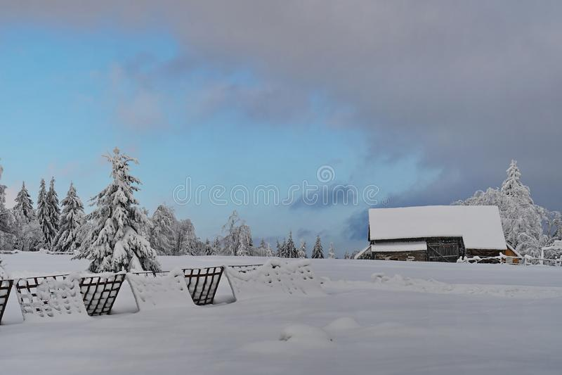 Mountains winter pine tree forest landscape 1 stock photography