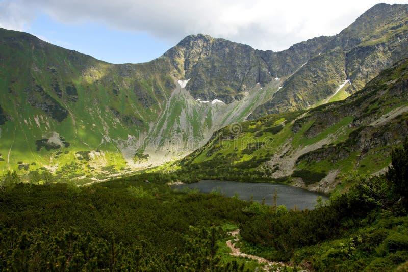 Mountainsee und Spirke lizenzfreie stockbilder