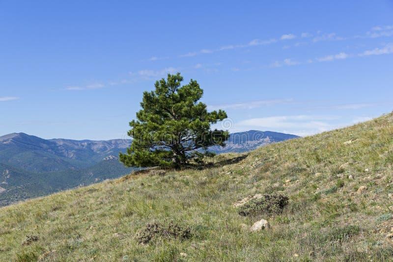 mountainside πεύκο στοκ φωτογραφία