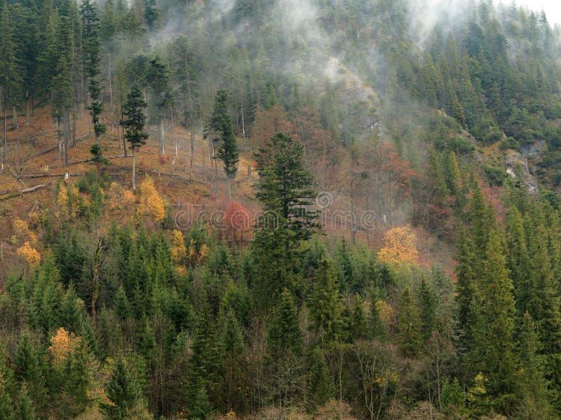 Mountainside που καλύπτεται ομιχλώδες από τα δέντρα Χρώματα φθινοπώρου στοκ φωτογραφία με δικαίωμα ελεύθερης χρήσης