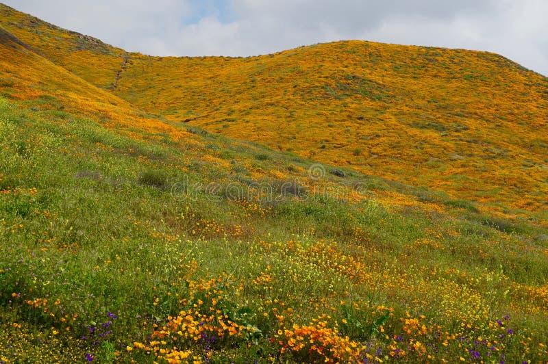 Mountainside των παπαρουνών την άνοιξη στοκ φωτογραφία με δικαίωμα ελεύθερης χρήσης