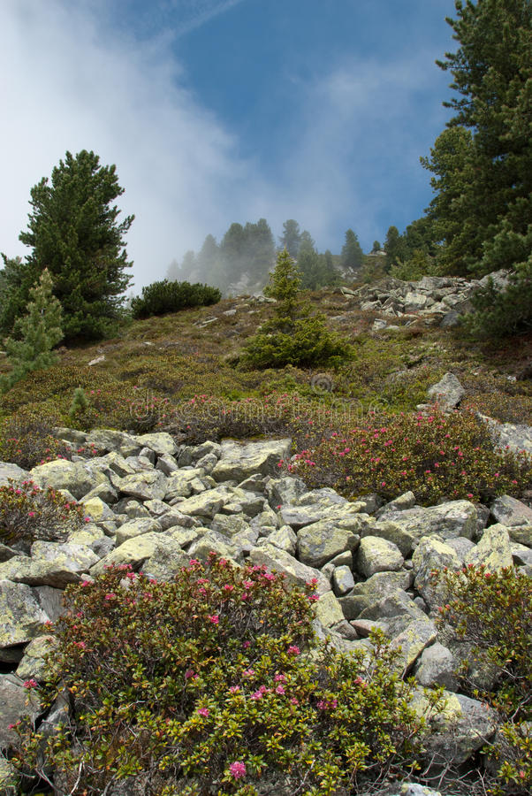Download Mountainside In Fog At Ochsengarten Austria Stock Image - Image: 20978049
