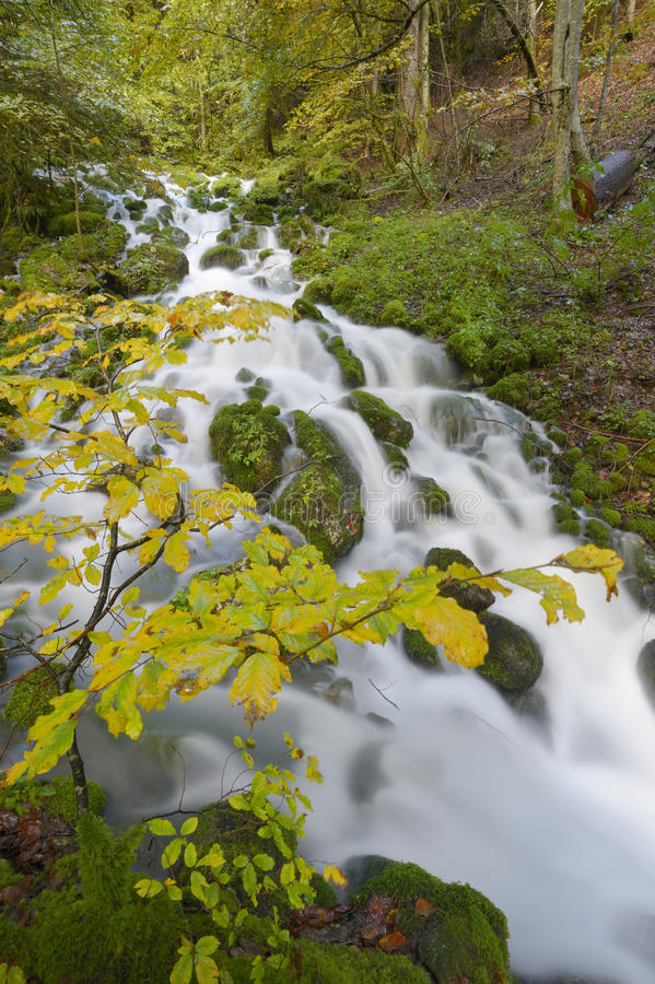 Mountainstream mit Herbstlaub stockfotografie