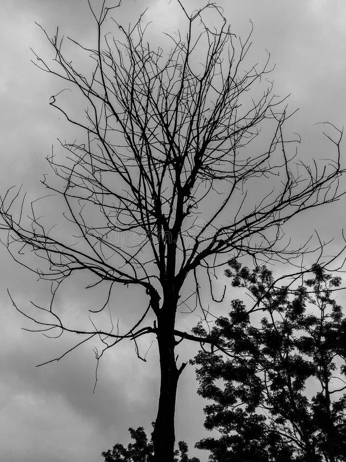 Mountaintree stockfotos