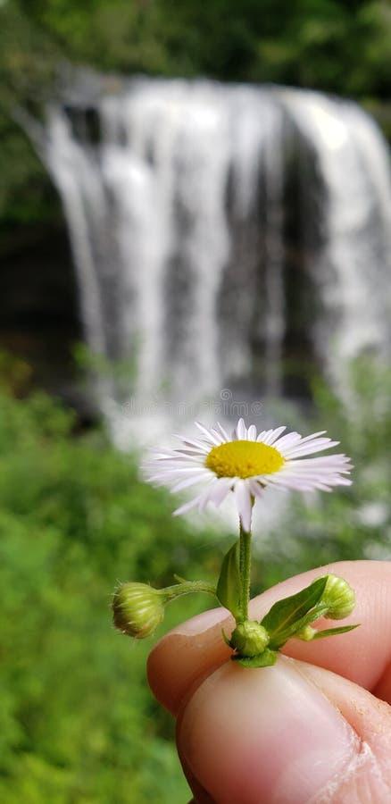 mountainwaterfall цветка водопада вау стоковое фото