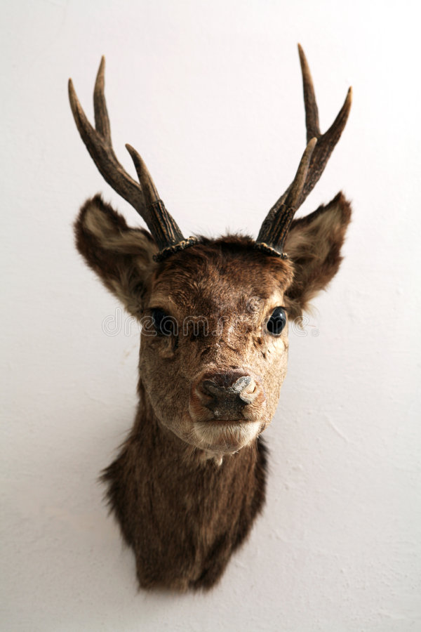 Mounted Deer Head Royalty Free Stock Photography