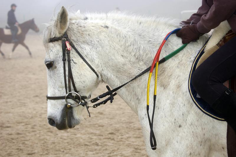 Mounted horse and rider. On sand, close up, in fog royalty free stock photography