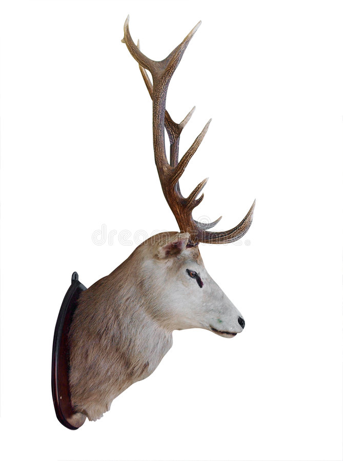 Free Mounted Stag Head Stock Photo - 9242260