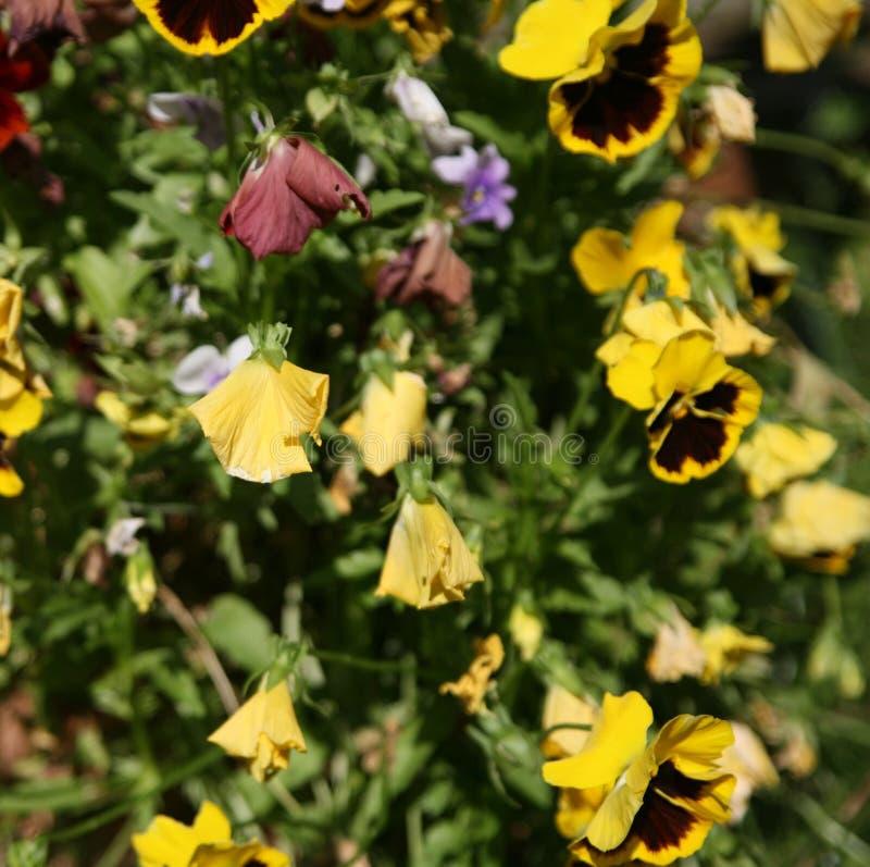 Mourir des fleurs folles photographie stock libre de droits