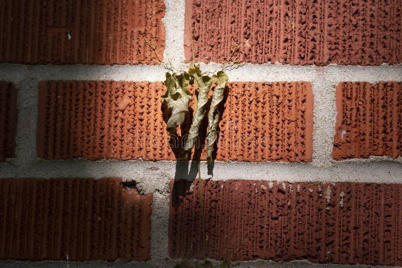 Mourir sur un mur de briques rouges images libres de droits