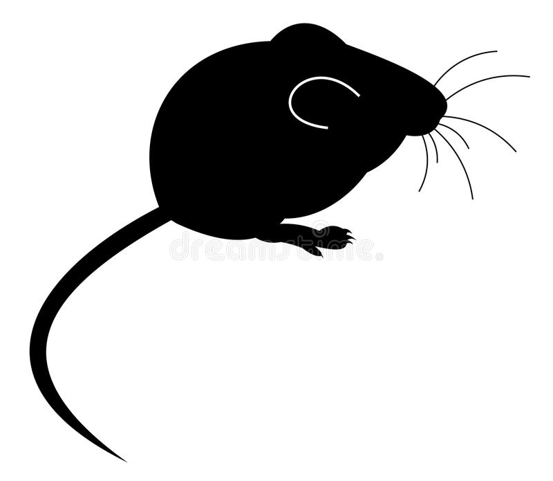 Mouse. Black mouse on white background