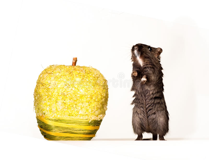 Download Mouse and apple stock image. Image of apple, white, funny - 18763773