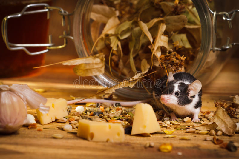 Mouse in basement feel cheese stock photo