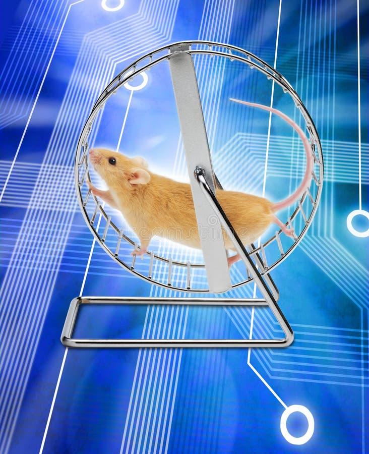 Mouse Computer Exercise Wheel Gig Economy stock photography