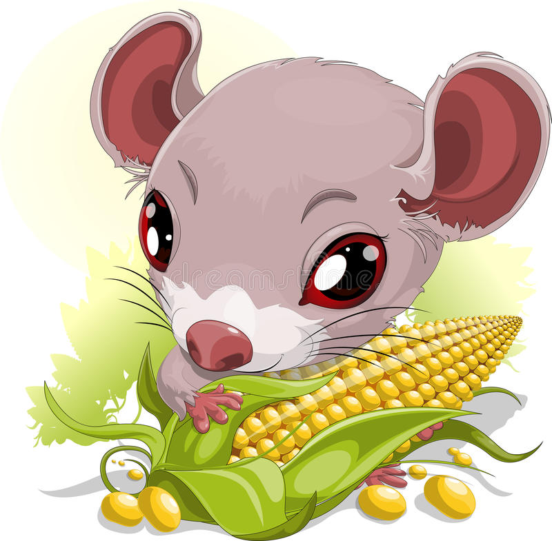Mouse with corn. Little mouse who eats corn in the field vector illustration
