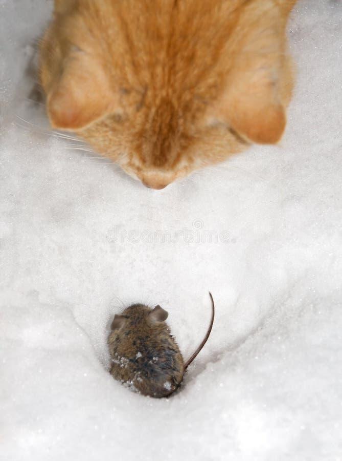 Mouse dei pesci del gatto fotografia stock libera da diritti