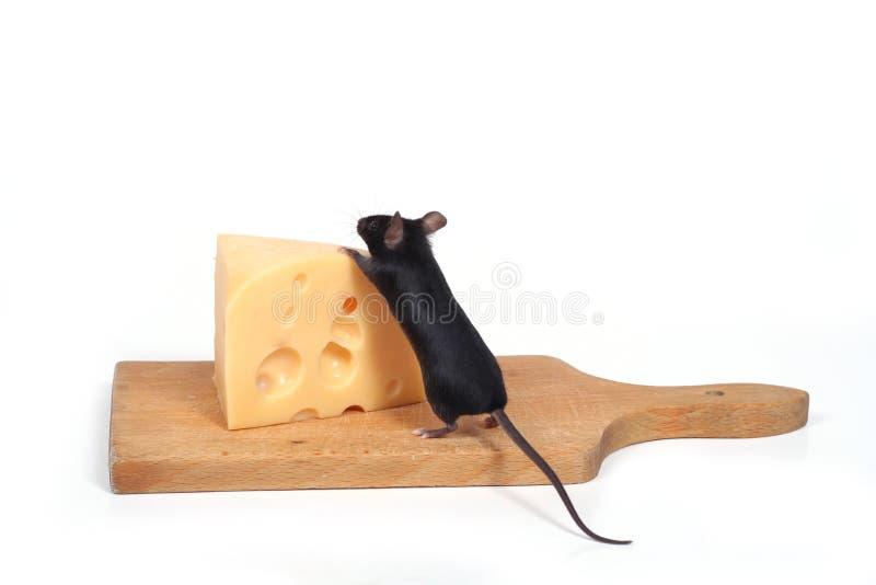 Mouse e formaggio fotografia stock