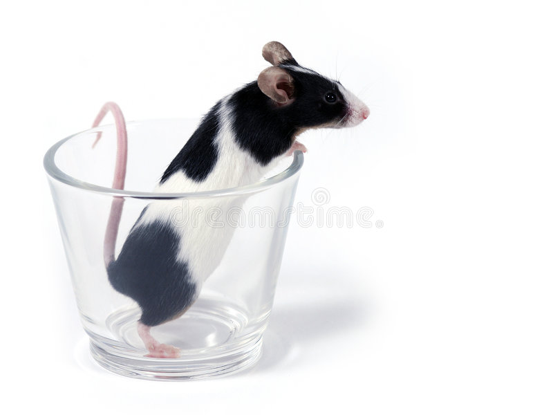 Mouse in a glass stock image