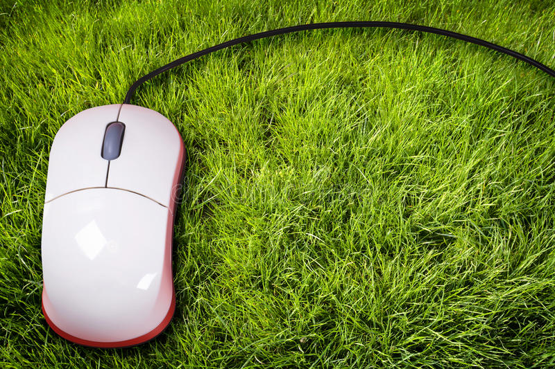 Download Mouse on grass stock image. Image of communications, button - 14093531