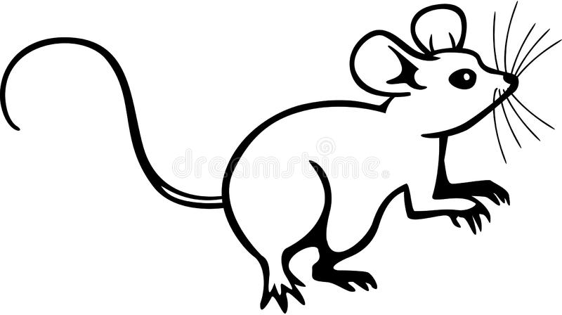 Drawing Lines With Mouse In Java : Mouse stock vector illustration of mammal artwork