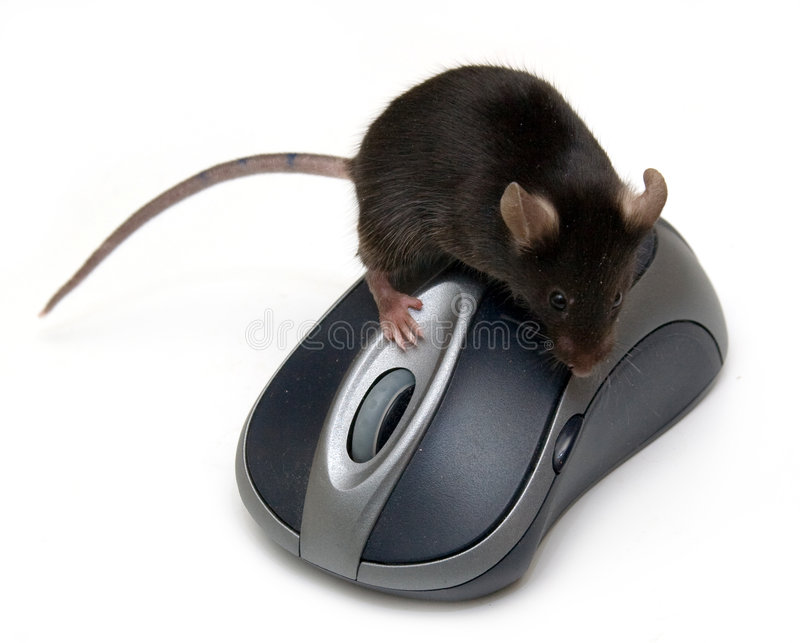 Mouse and mouse stock photo