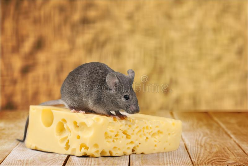 Mouse stock images
