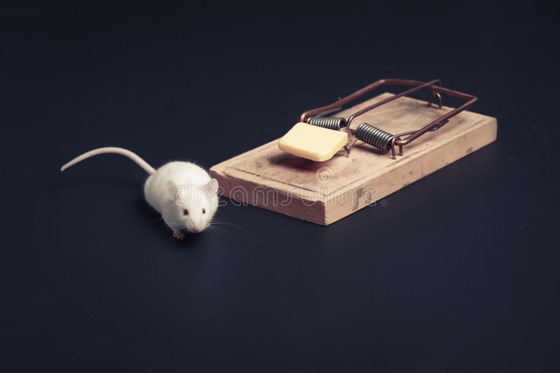 Mouse Near Ouse Trap With Copy Space Royalty Free Stock Images
