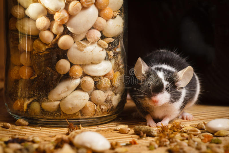 Mouse in old basement with herbs stock photos