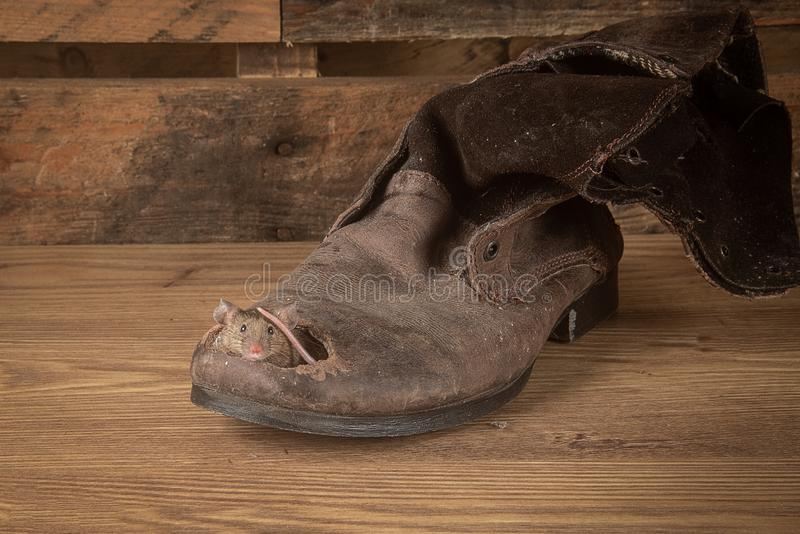Mouse in old boot royalty free stock image