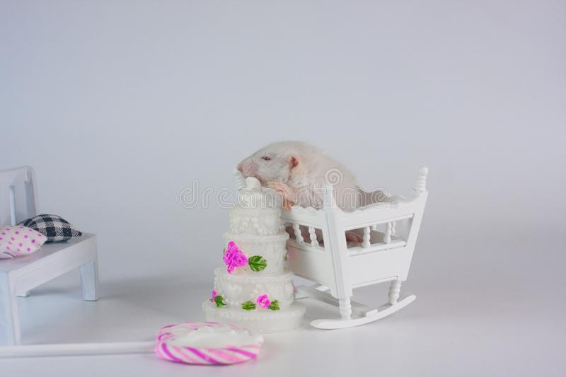 The mouse sits in a crib on the background of the cake. stock photos