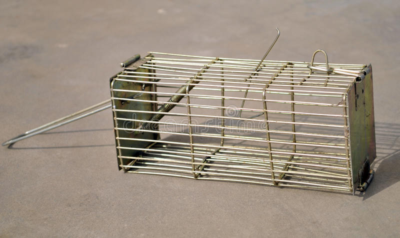 Download Mouse trap stock photo. Image of life, mouse, still, outdoors - 11892004