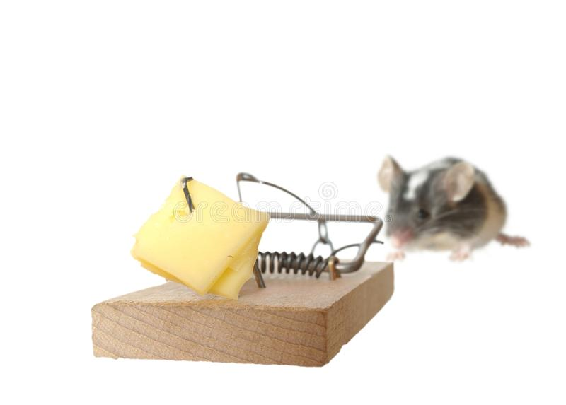 Download Mouse and trap stock photo. Image of bait, greed, temptation - 18051886