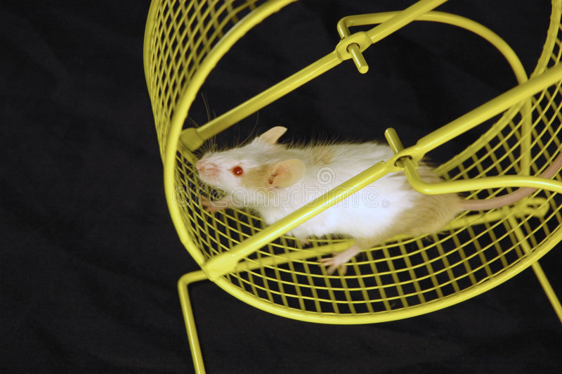 Download Mouse on wheel stock image. Image of cycle, circle, exercise - 542093