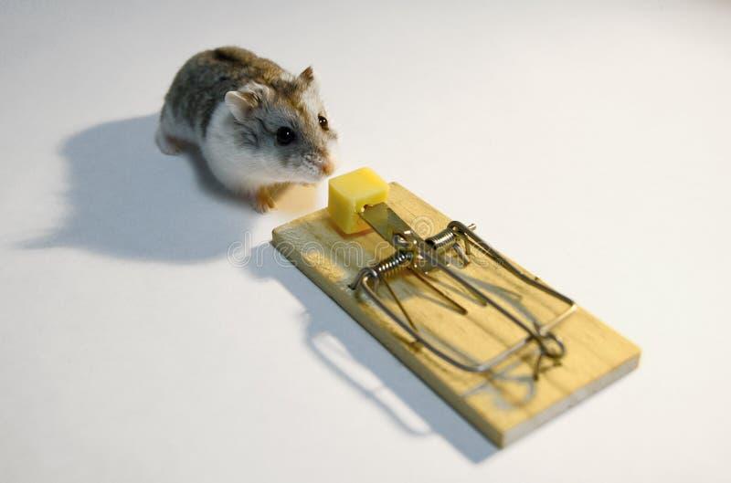 mousetrap arkivbild