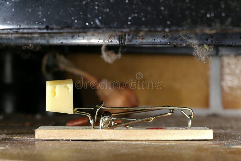 mousetrap image libre de droits