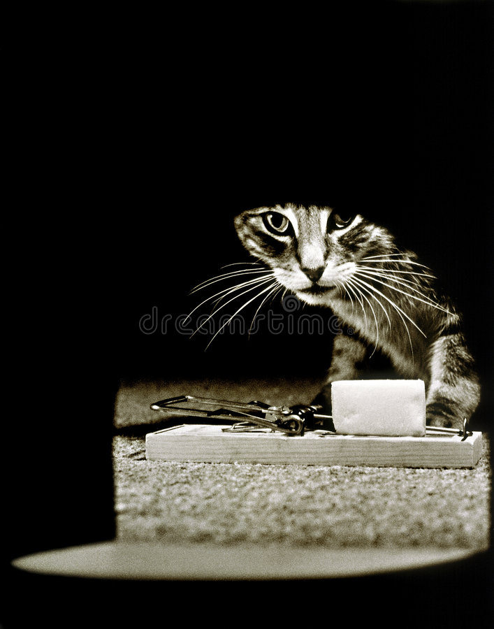 Mousetrap Hole Cat. Cat looking into mouse hole with a mouse trap