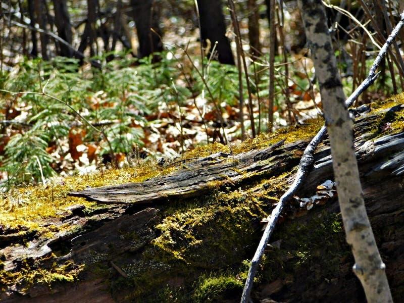 Mousse couverte pour ouvrir une session les bois image stock