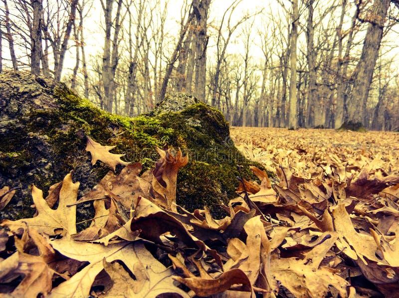 Mousse d'automne photo stock