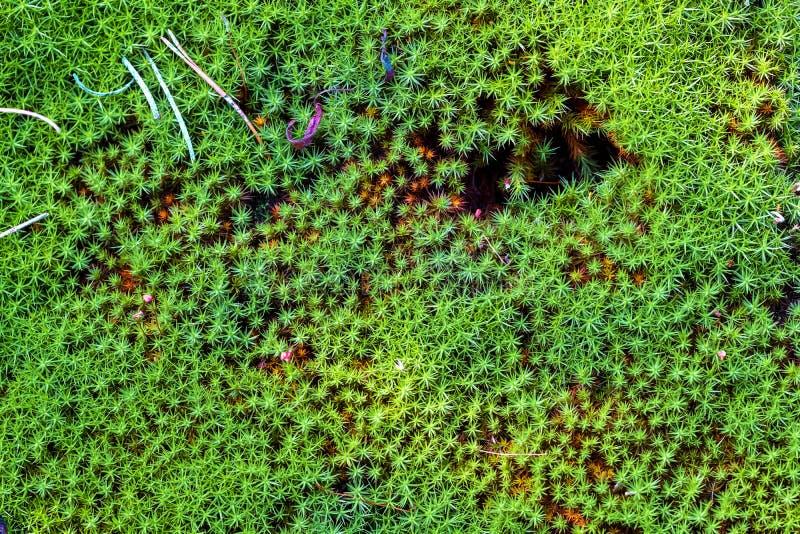 Mousse de forêt dans un marais, détails images stock