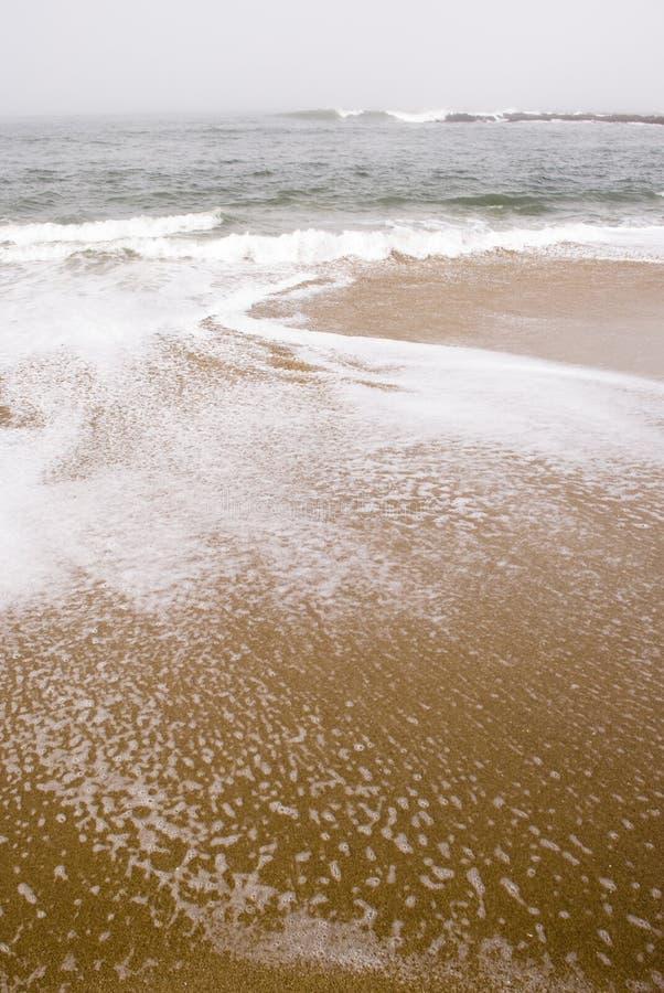Mousse de mer photos libres de droits