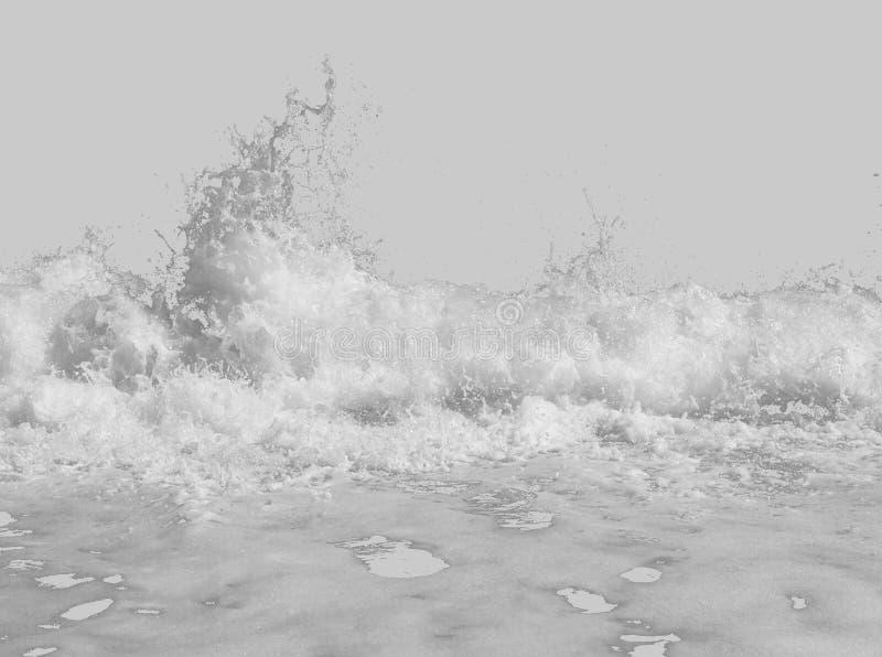 Mousse de mer blanche du ressac, d'isolement sur un fond blanc images libres de droits
