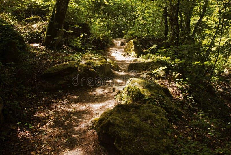 Mousse ensoleillée et Rocky Path par des bois image stock