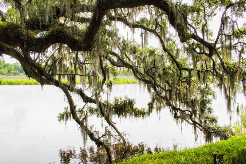 Mousse espagnole à la plantation de magnolia en Charleston South Carolina image stock