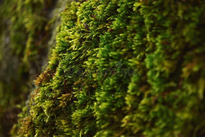 Mousse des arbres latest des traitements bio pour vos - Mousse sur les arbres ...