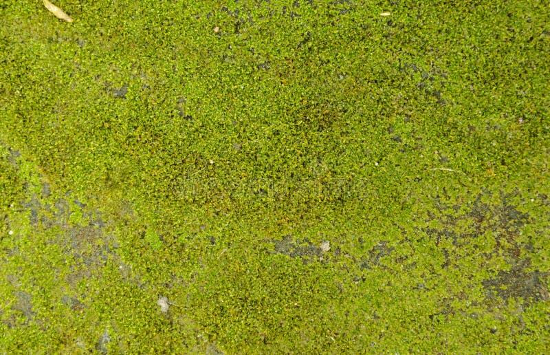 Mousse et goutte de l'eau sur l'au sol de ciment photos stock