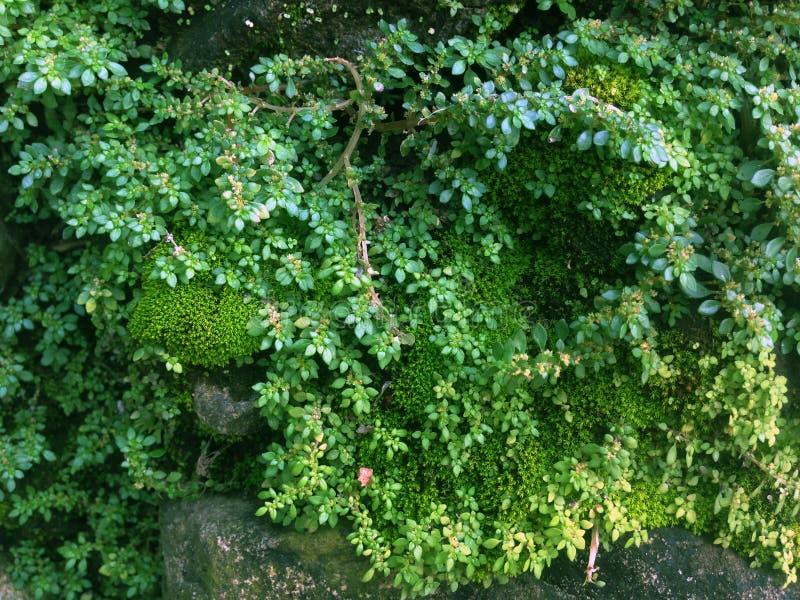 Mousse et mauvaises herbes images stock
